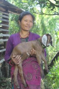 Woman with Jamuna goat